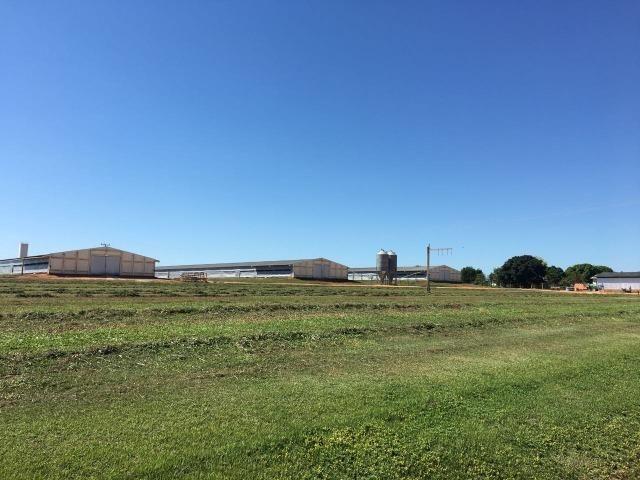 Granja com área de 40 hectares, localizada a 50 km de Lucas do Rio Verde - Foto 13