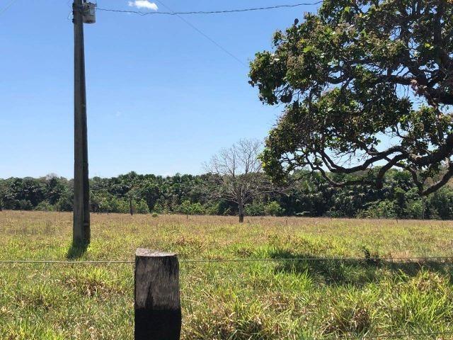 Fazenda - Paraíso do Tocantins/TO - Foto 19