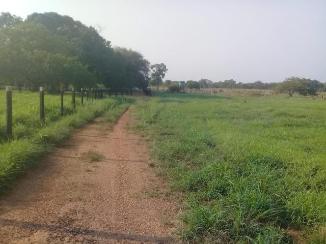 Fazenda - Paraíso do Tocantins/TO - Foto 16