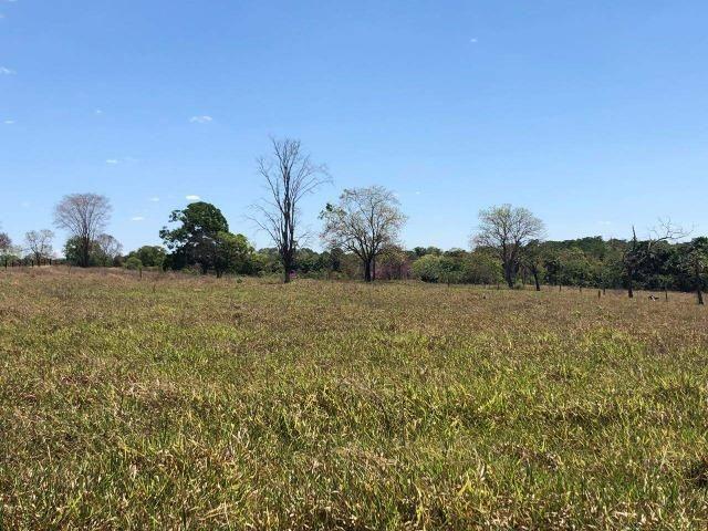Fazenda - Paraíso do Tocantins/TO - Foto 20