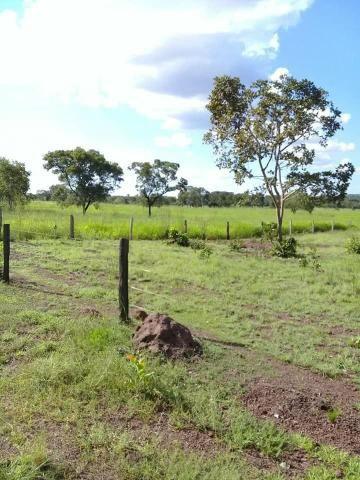 Fazenda 350,hectares beira do rio cuiaba - Foto 4