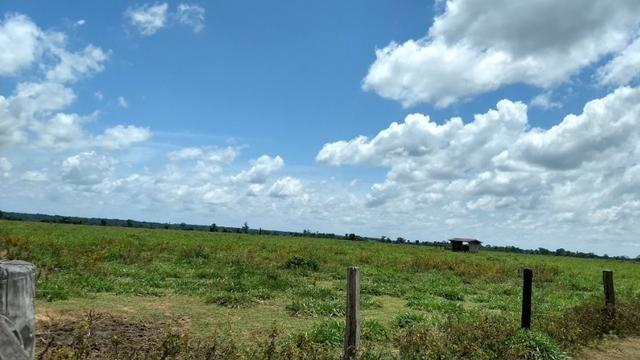 Fazenda 1.028 Hectares Dupla Aptidão - Nova Guarita - MT - Foto 7