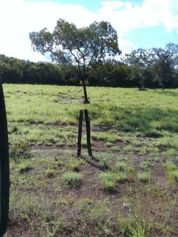 Fazenda 350,hectares beira do rio cuiaba - Foto 13