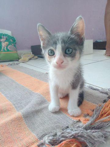 Gatinha para adoção  - Foto 3