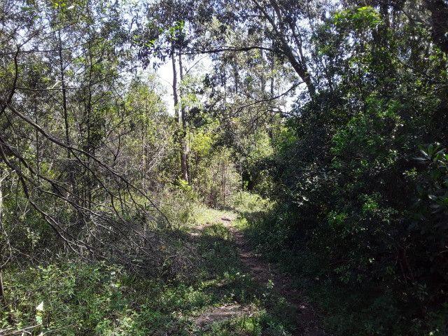 3 hectares arborizado,lugar tranquilo e seguro em Taquara - Foto 10