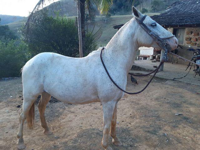 cavalo piquira e uma potra