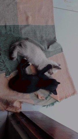 gatos de 1(um) mês,ainda tem mais 2(dois) só que ainda não tirei foto