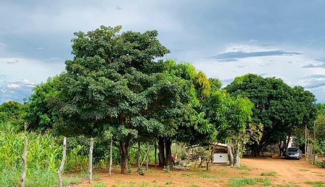 Samuel Pereira oferece: Linda chácara 4,2 hectares, Núcleo Rural Bom Sucesso regularizado - Foto 11