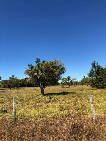 Fazenda - Paraíso do Tocantins/TO - Foto 8