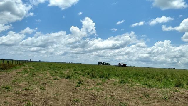 Fazenda 1.028 Hectares Dupla Aptidão - Nova Guarita - MT - Foto 6