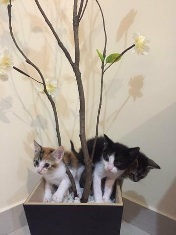 Adoção de Gatos - Foto 4