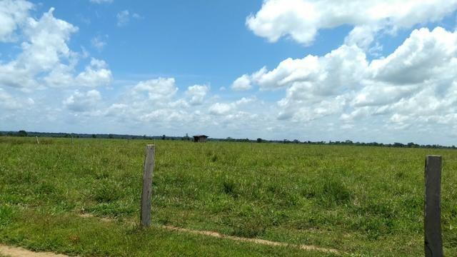 Fazenda 1.028 Hectares Dupla Aptidão - Nova Guarita - MT - Foto 8
