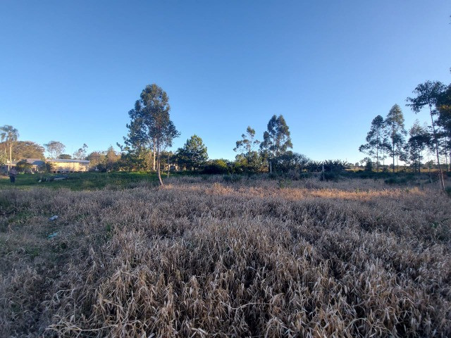 Velleda oferece sítio 2,5 hectares a 700 metros da RS040, ac troca - Foto 19