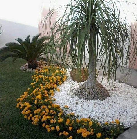 Jardineiro Paisagista - Foto 2