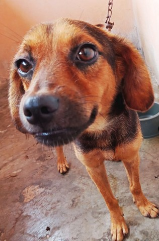 Adoçao cachorro - Foto 2