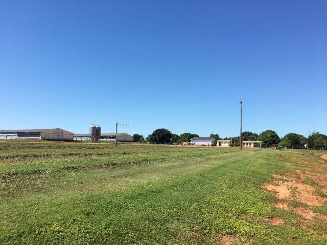 Granja com área de 40 hectares, localizada a 50 km de Lucas do Rio Verde - Foto 18