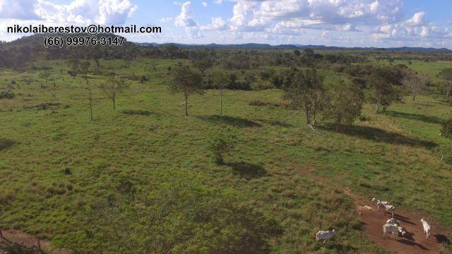 Fazenda 1.950 hectares nordeste mt nikolaiimoveis