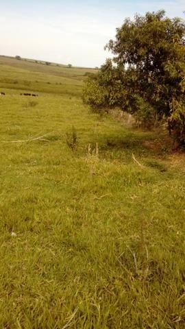 Sítio de 3.5 alqueires - Região de Promissão - Foto 3