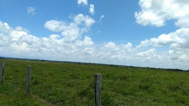 Fazenda 1.028 Hectares Dupla Aptidão - Nova Guarita - MT - Foto 3