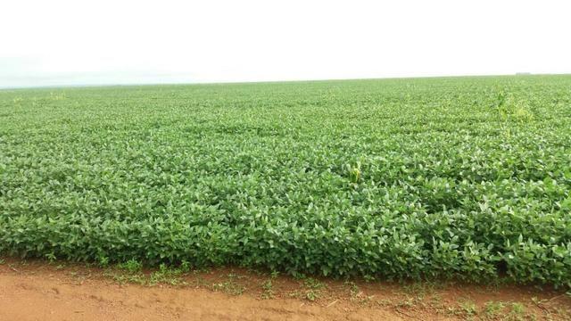 Fazenda 710 Hectares Plantando Lavoura - Ipiranga do Norte - MT - Foto 3
