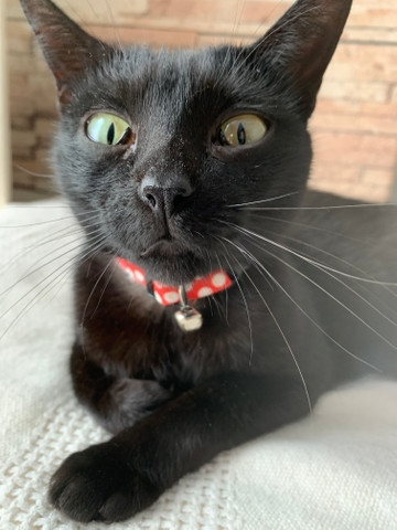 Gato - Foto 3
