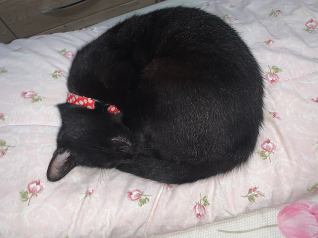 Gato - Foto 5