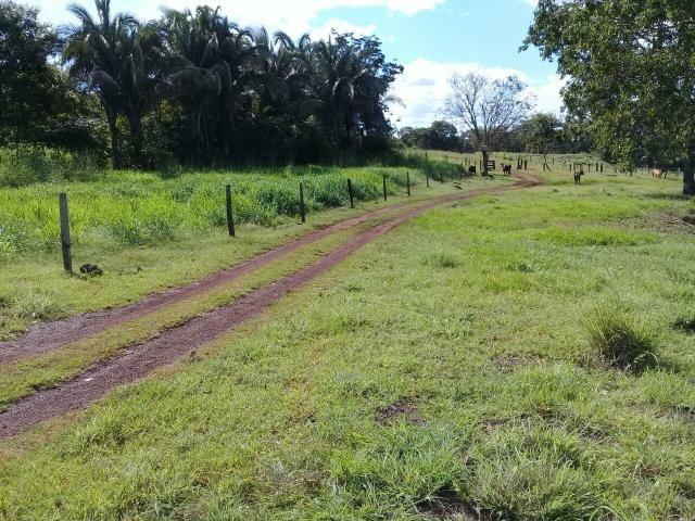 Fazenda 350,hectares beira do rio cuiaba - Foto 11