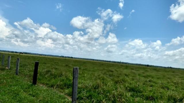 Fazenda 1.028 Hectares Dupla Aptidão - Nova Guarita - MT - Foto 2