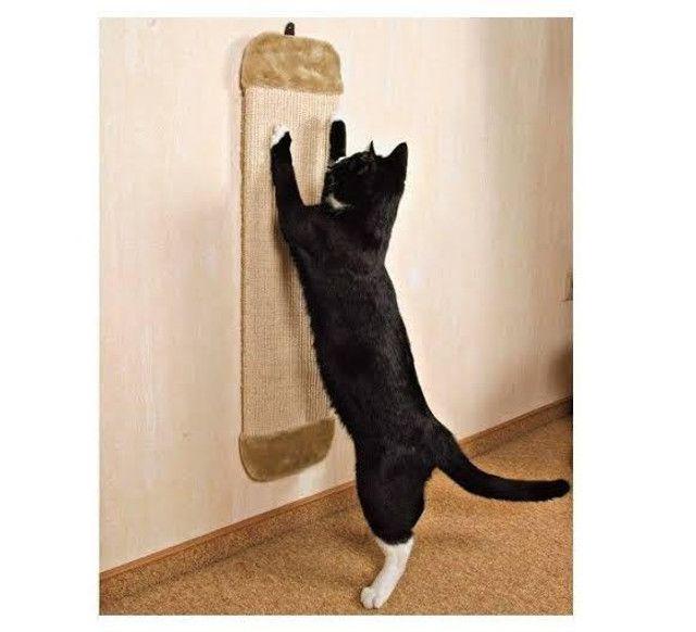 Arranhador de parede para gatos