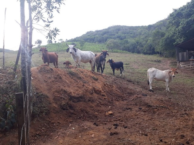 Velleda oferece 35 hectares , 1 km da cidade, local paradisíaco - Foto 13