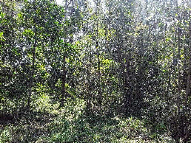 3 hectares arborizado,lugar tranquilo e seguro em Taquara - Foto 2