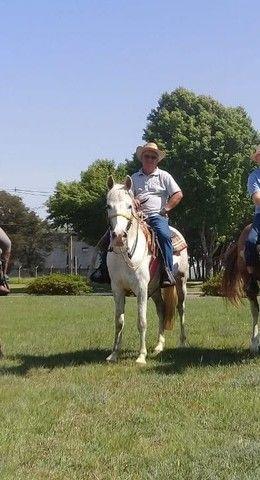 Vendo este cavalo , 3.900,00 - Foto 2