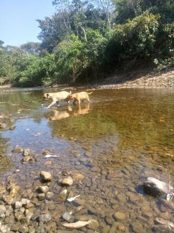 Sítio em Livramento - Foto 4