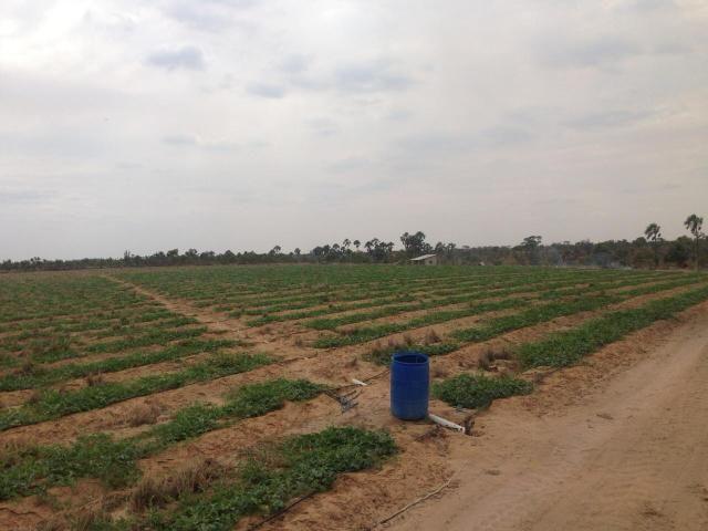 Fazenda no Bonfim - Foto 2
