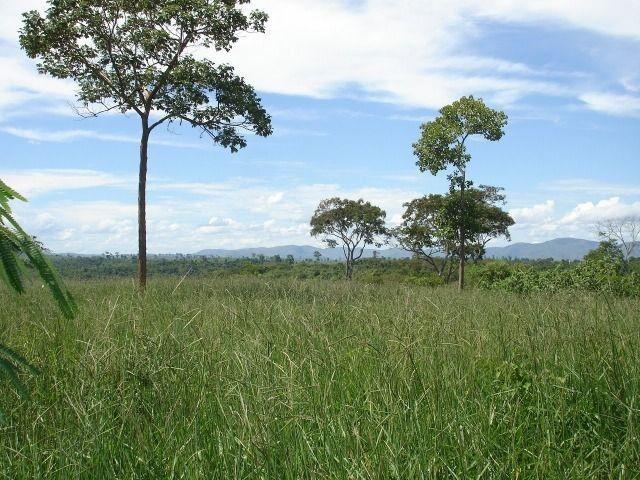 Fazenda 484 hectares em Governador Valadares/MG - Foto 7