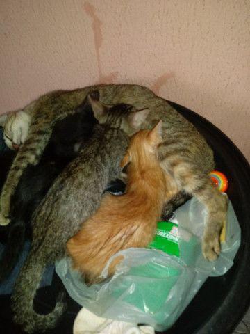 Doação de gatinhos - Foto 4