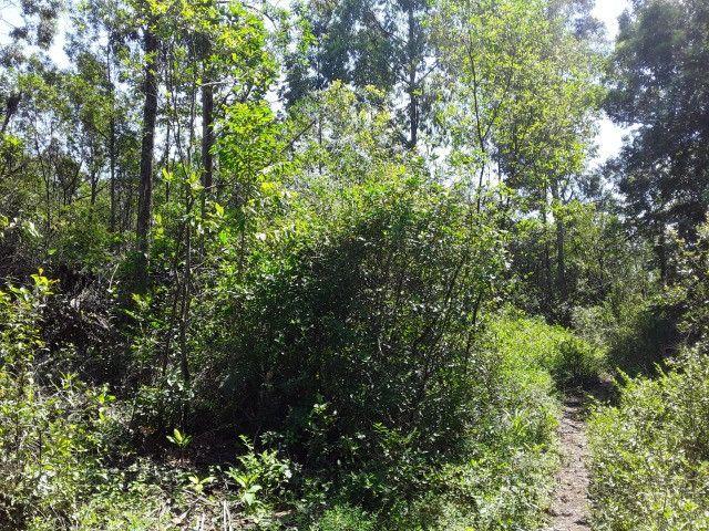 3 hectares arborizado,lugar tranquilo e seguro em Taquara - Foto 6