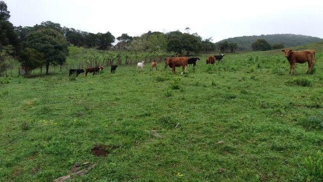Velleda oferece 35 hectares , 1 km da cidade, local paradisíaco - Foto 14