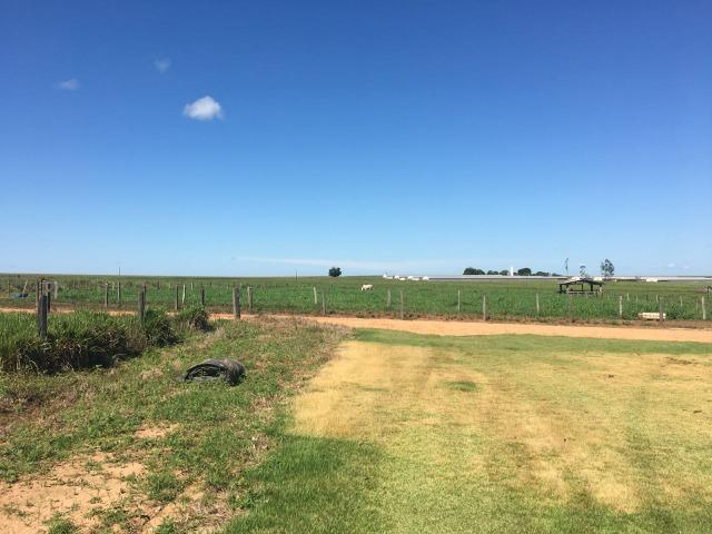 Granja com área de 40 hectares, localizada a 50 km de Lucas do Rio Verde - Foto 7