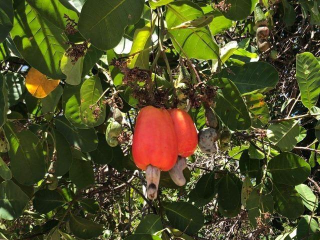 Fazenda - Paraíso do Tocantins/TO - Foto 4