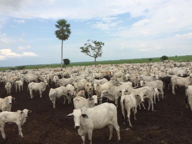 Fazenda gado