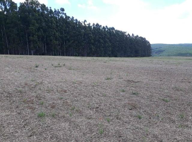 Terreno rural - Foto 8