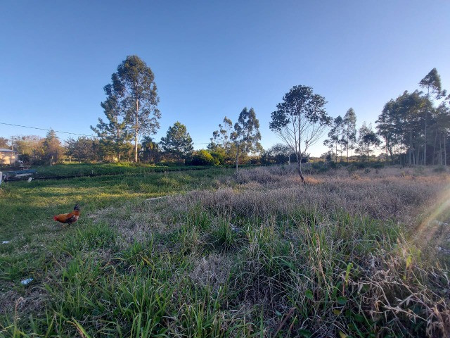 Velleda oferece sítio 2,5 hectares a 700 metros da RS040, ac troca - Foto 13