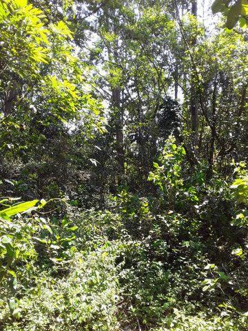 3 hectares arborizado,lugar tranquilo e seguro em Taquara - Foto 8