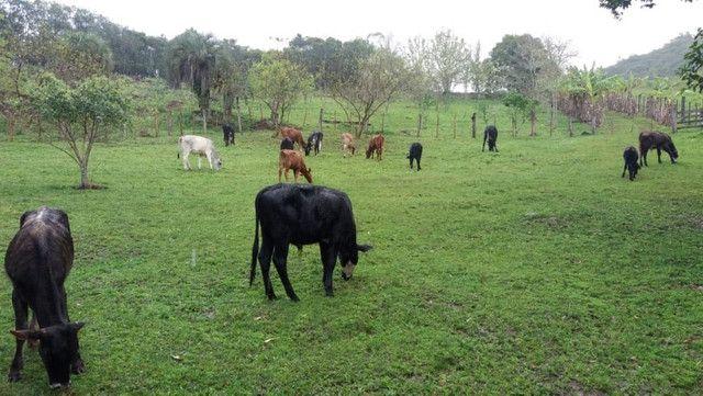 Velleda oferece 35 hectares , 1 km da cidade, local paradisíaco - Foto 8