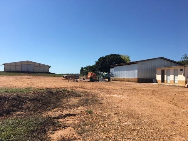 Granja com área de 40 hectares, localizada a 50 km de Lucas do Rio Verde - Foto 19