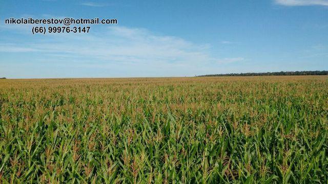 Fazenda 1.655 hectares região dos baianos nikolaiimoveis