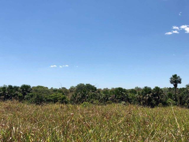 Fazenda - Paraíso do Tocantins/TO - Foto 14