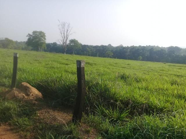 Fazenda - Paraíso do Tocantins/TO - Foto 13