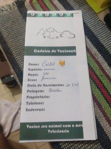 Doação Cachorros fêmeas, já vacinados polívalente e raiva - Foto 3